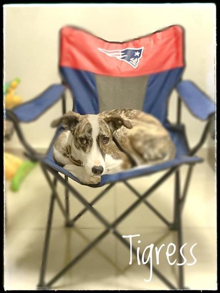 Tigress' seat